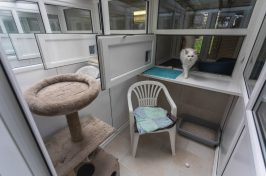 white cat in double room in cattery