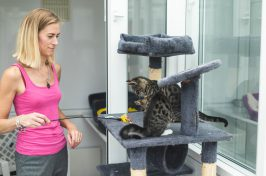 woman playing with small cats in cattery