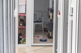 inside the cattery at Star Boarding Kennels
