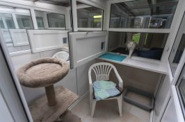 double cattery room