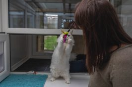 cat playing at cattery