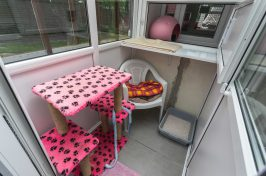 single cattery room