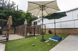 outside play area at kennels