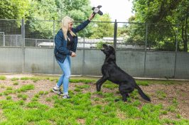 labrador playing at kennels